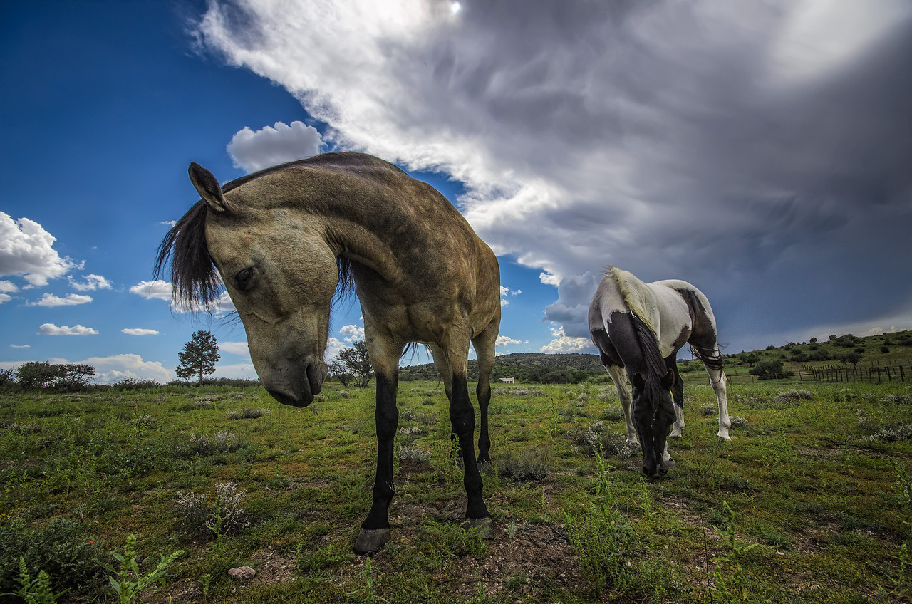 Beautiful horses in Williamson Valley, near Prescott, AZ