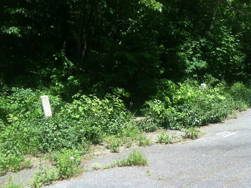 It's hard to see because of the over overgrowth but this is a little bridge with runoff coming down the hill and under the roadway. The two white posts are the ends if the bridge and you can barely make out the bridge curb in the middle.