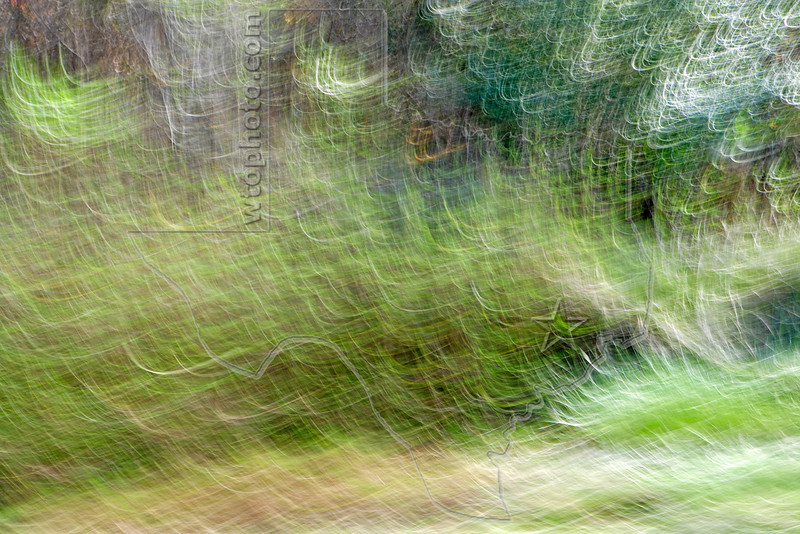 Abstract Grass and Trees,<br /> Brazoria National Wildlife Refuge, Texas