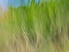Abstract Grass,<br /> Brazoria National Wildlife Refuge, Texas