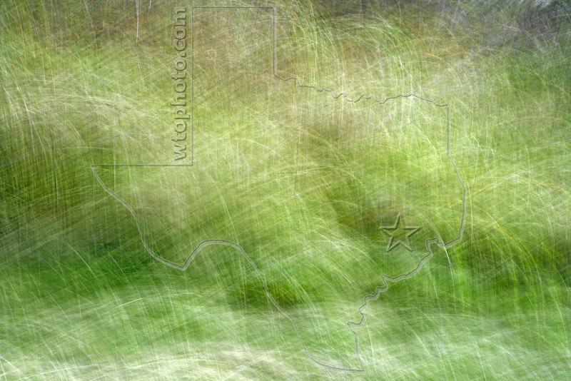 Abstract Grass,<br /> Brazoria National Wildlife Refuge, Texas