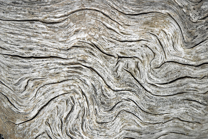 Weathered Oak Pattern,<br /> Aransas National Wildlife Refuge, Texas