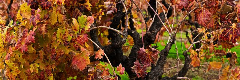 21) Fall Harvest 200811271314
