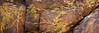 18) Joshua Tree Lichen 200712222224