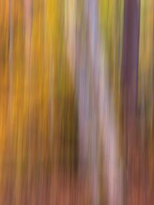 Autumn Directional
