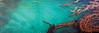 2) Aquatic Spectrum 200708101540