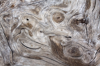 Pine trunk landscape