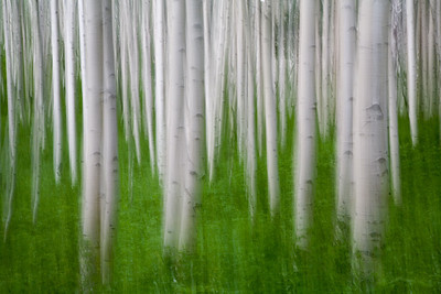 Aspen Dreams - long exposure and camera pan