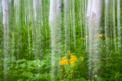Aspen Dreams 2 - long exposure and camera pan