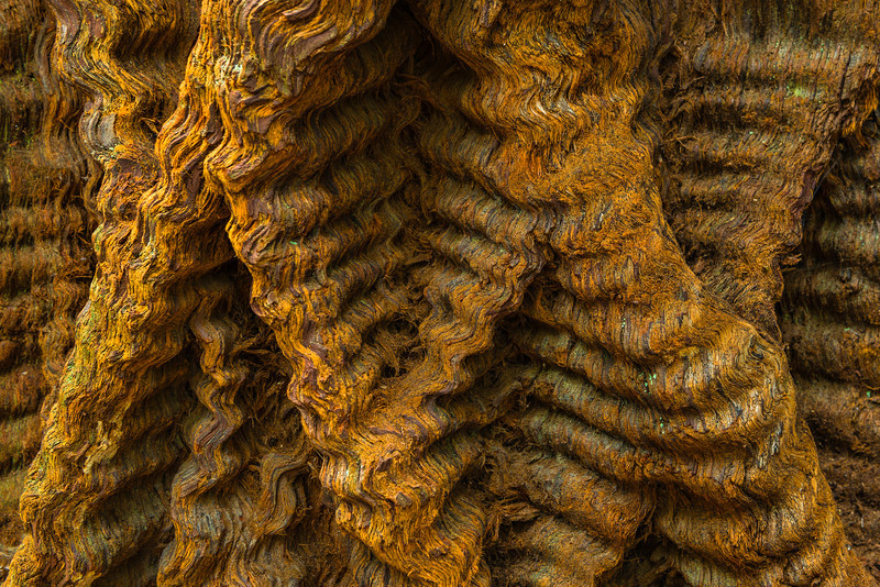 """Redwood Braids"" Some amazing textures on this Redwood in Big Basin Redwoods State Park It looks like braids of Redwood fibers! Amazing what you can find when you get close to nature! If you look in close you can see the fibers and fine detail! What do you think!?"