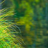 """""""Flowing Grasses in Yosemite""""  Nothing can be more calming then watching the wind blowing the grasses in Yosemite.  This image has the reflections of the Merced blurred in the background.   ID D8X3413"""