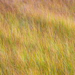 Grass-in-El-Cap-Meadow_Yosemite-National-Park-D8X2992