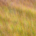 Grass-in-El-Cap-Meadow_Yosemite-National-Park-D8X2992