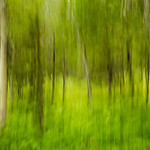Green-Abstracts-in-Nature-Aspens-Grass-Glacier-National-Park-4016 Master