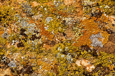 abs05:  Bill's image of lichen populating a boulder near a rock art site in northern Utah