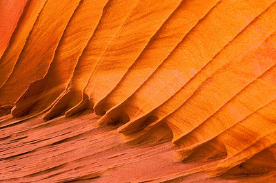 abs16: detail of a sandstone wall glowing with reflected light, in the South Coyote Buttes, Vermilion Cliffs National Monument, Arizona