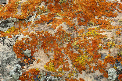 abs12: lichen splashing over a rock, photographed by Phyllis near a remote  rock art site in northeastern Utah