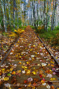 A Path to Autumn.  October 2011, Acadia National Park, Maine.