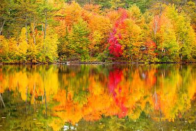 Adirondack, Fall Colors, Lack Placid, New York, Saranac River, 普莱西德湖, 纽约州, 阿迪那达克,秋色
