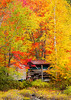 Adirondack; Fall Colors; Lack Placid; New York; Saranac River; 普莱西德湖; 秋色; 纽约州; 阿迪那达克
