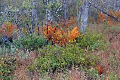 Fern vegetation