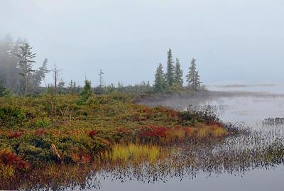 Misty morning shoreline inflow