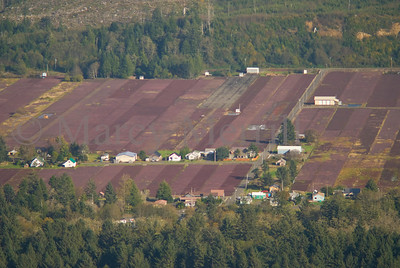 Cranberry bogs from the air.