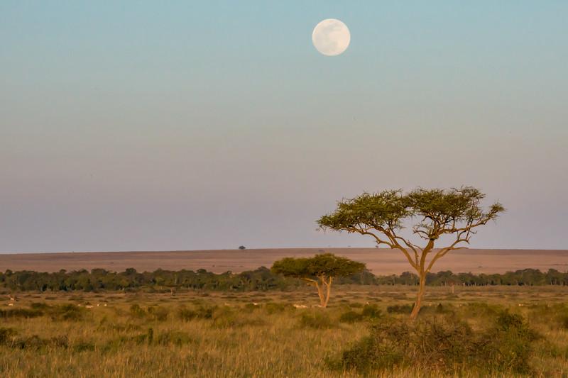 Moon over the Mara; Kenya