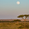 Moon over the Mara; Kenya