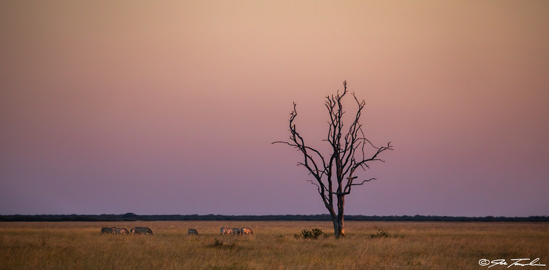 Savanna Twilight