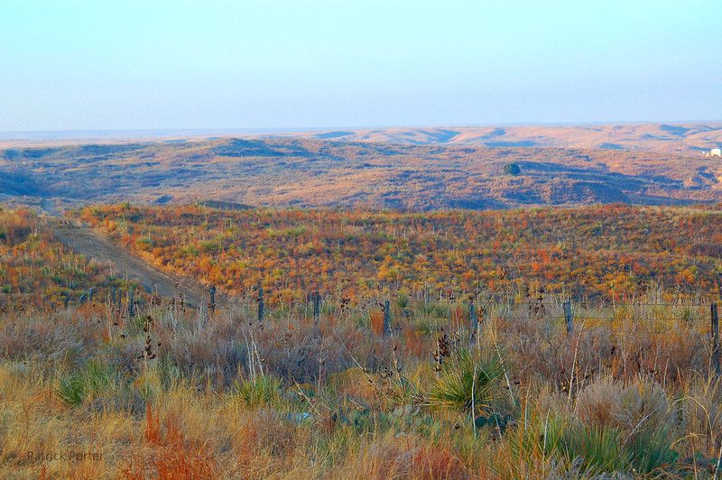 Fall colors at sunrise south of Fritch, Texas.