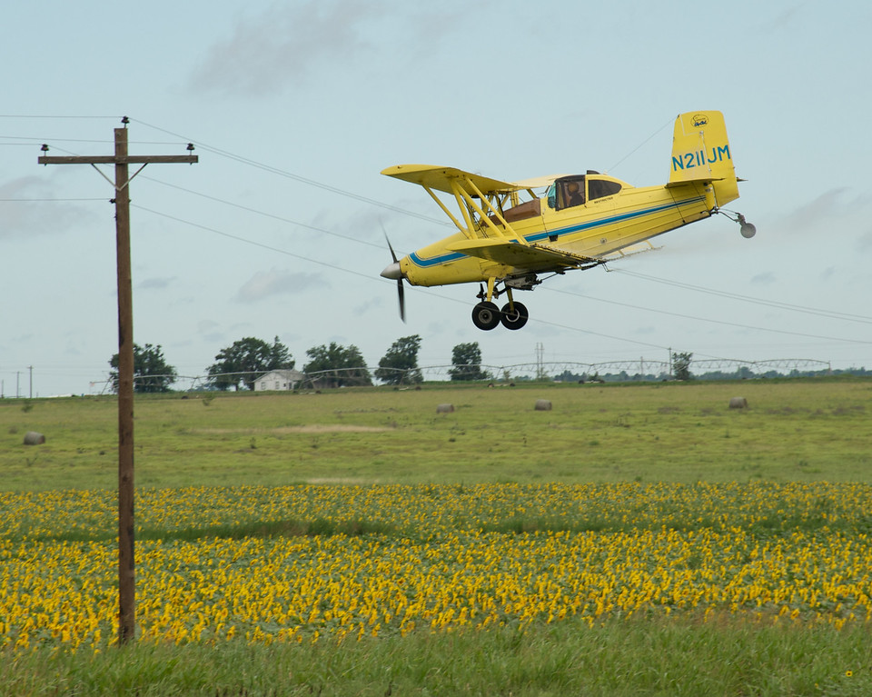 Aerial applicator barely clearing the power lines while spraying a sunflower field. There are not many of these biplanes still in use. They are slower than more modern single wing aircraft, but they can spray in challenging situations where a faster airplane might not be able to.