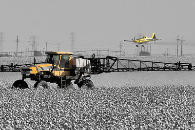 Applying cotton harvest aids