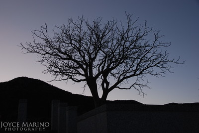 Tree at the steps of the Air Force Academy, CO, DSC_0565