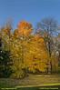 Cindy's-Trees-1108