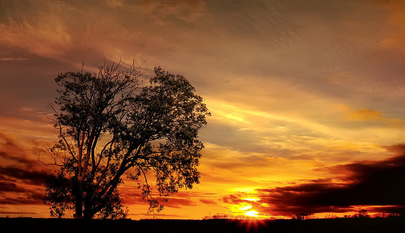 Sundown Tree