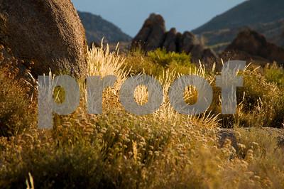 Morning Desert Landscape