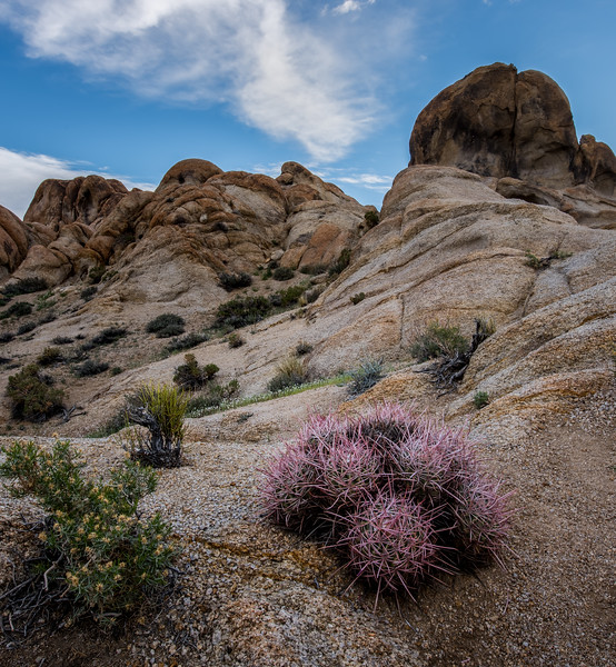 Pink desert cactus on rocky cliffs with blue sky and clouds