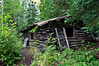 Abondanded log cabin on hike around Brier Lake