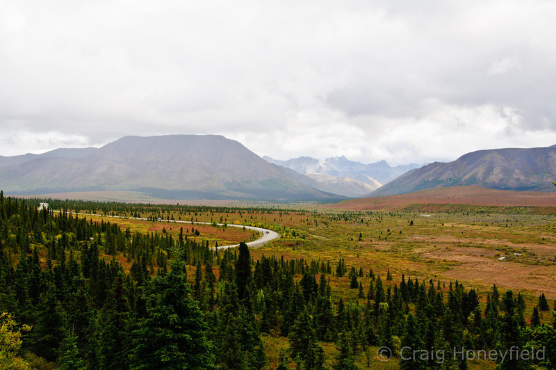 Fall Colors in Denali National Park