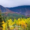 139  G South of Denali Fall Colors