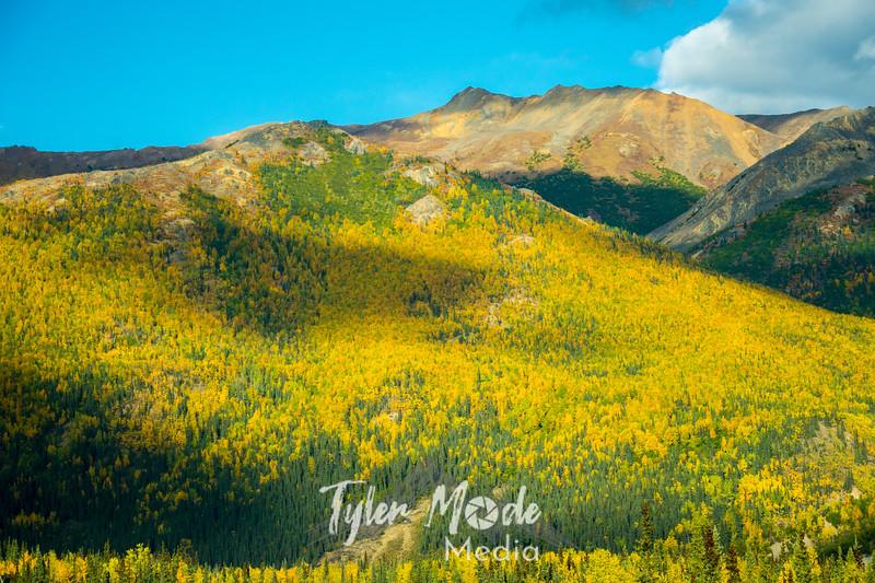 199  G Fall Colors Near Denali
