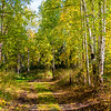 654  G Chena River Area Fall Colors Road V