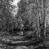 655  G Chena River Area Fall Colors Road BW V