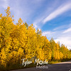 639  G Chena River Area Road and Color