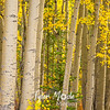 752  G Fall in South Central Alaska Aspen Forest