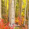 754  G Aspen Forest