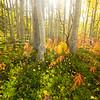 760  G Aspen Forest V