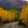 859  G Fall in South Central Alaska Road V