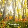 767  G Aspen Forest